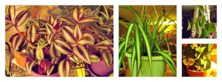 plants vs. snow