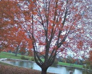 oakgrovepark - Copy