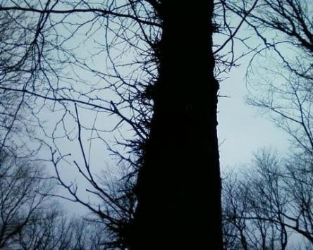 locust tree - ymcatrail