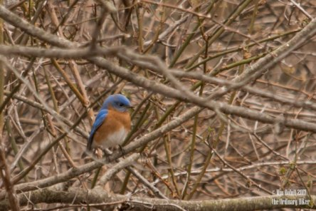 bluebird in the thick of it